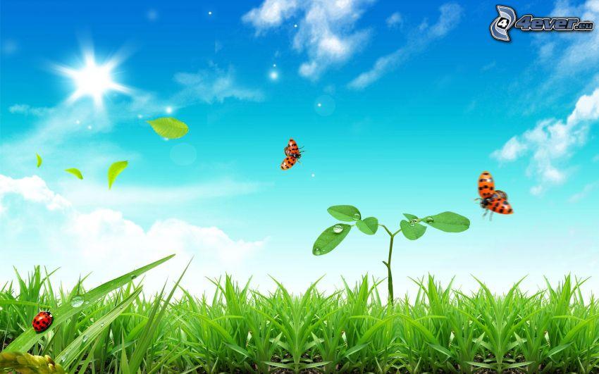 växt, nyckelpigor, gräs, himmel, sol