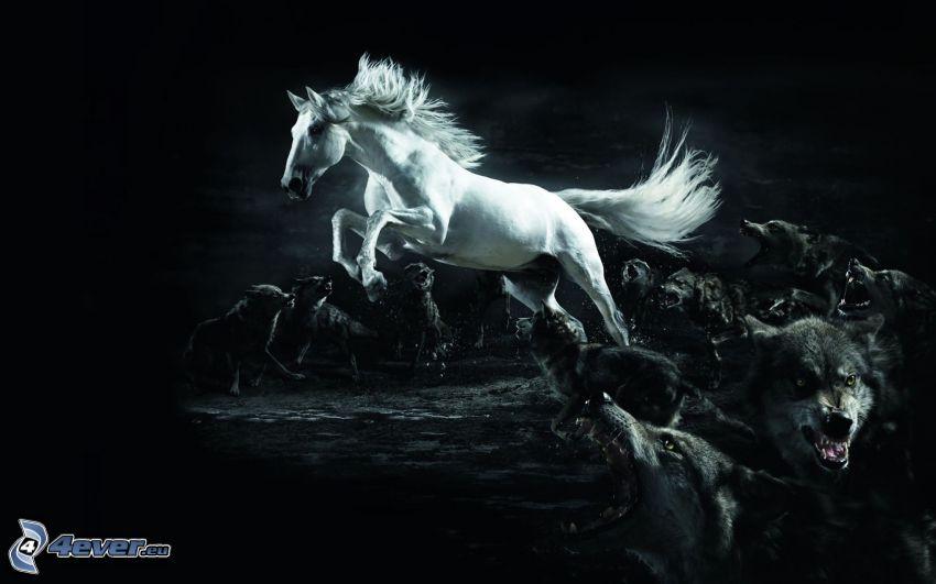 vit häst, vargar