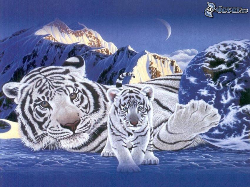 vit tiger, måne, Jorden, berg