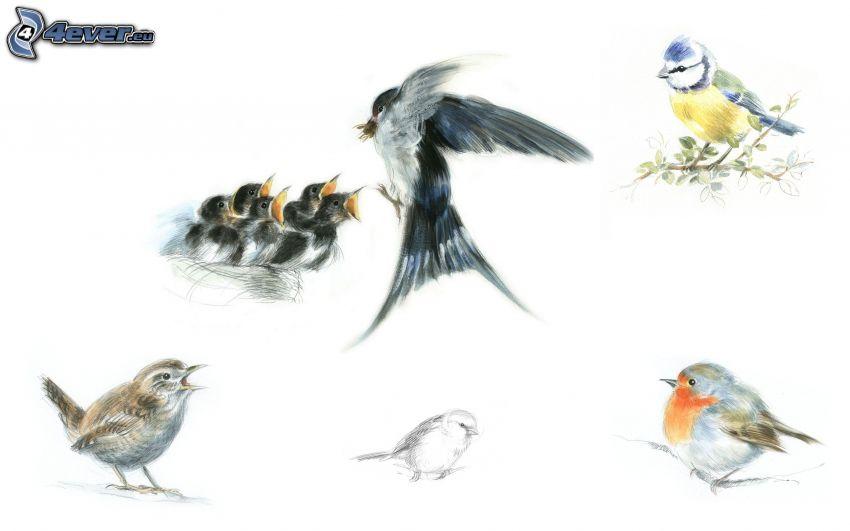 fåglar tecknade bilder