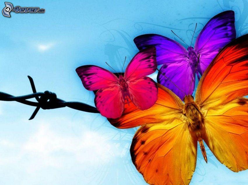 färggranna fjärilar