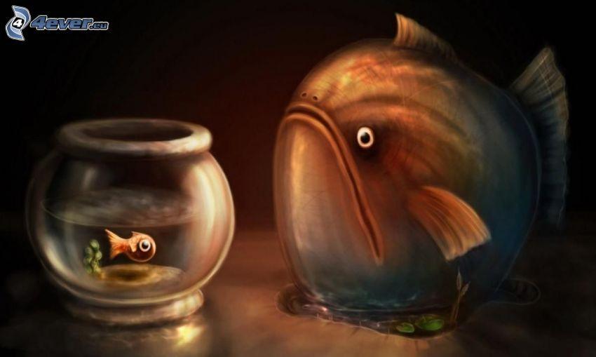 fiskar, akvarium