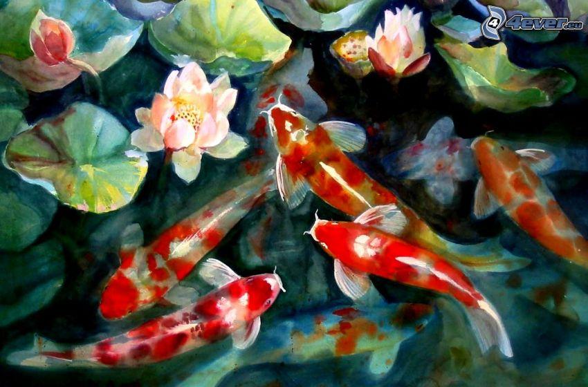 fiskar, näckrosor, bild