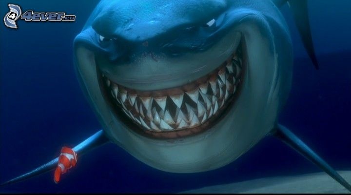 haj, fisk, Nemo, hav