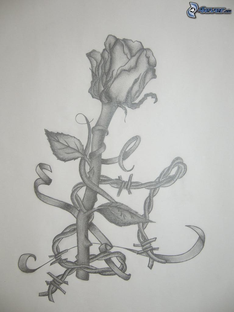 ros, teckning