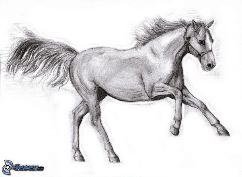 tecknad häst