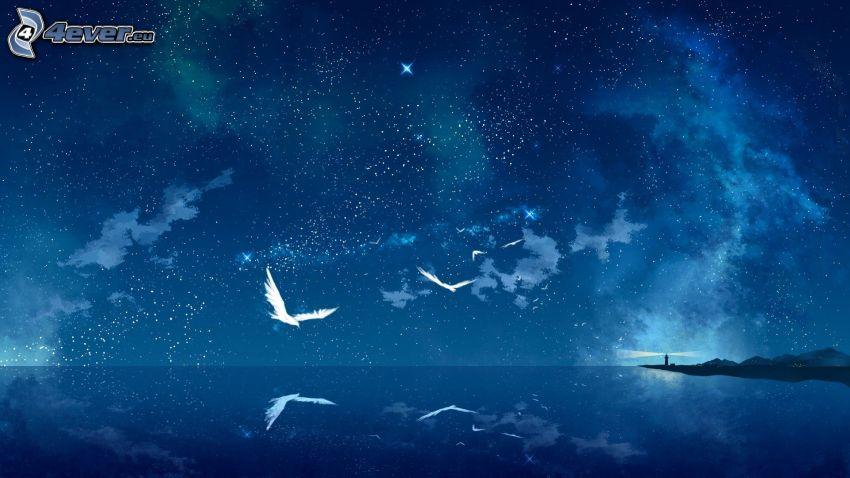 hav, stjärnor, fåglar, ö