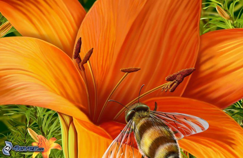 humla på en blomma, lilja