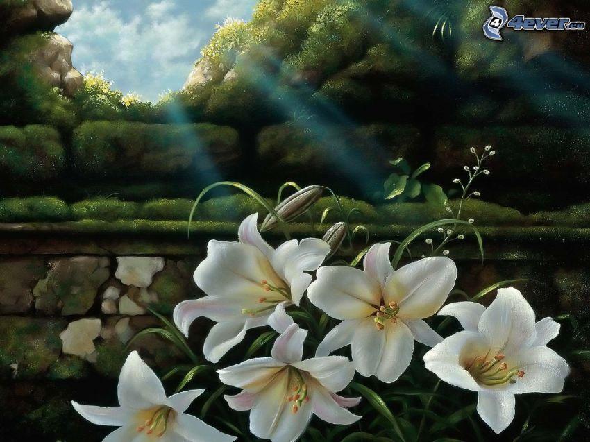 liljor, solstrålar, skog