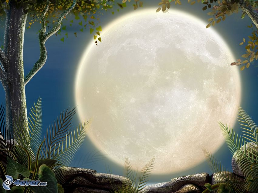 måne, träd, natt