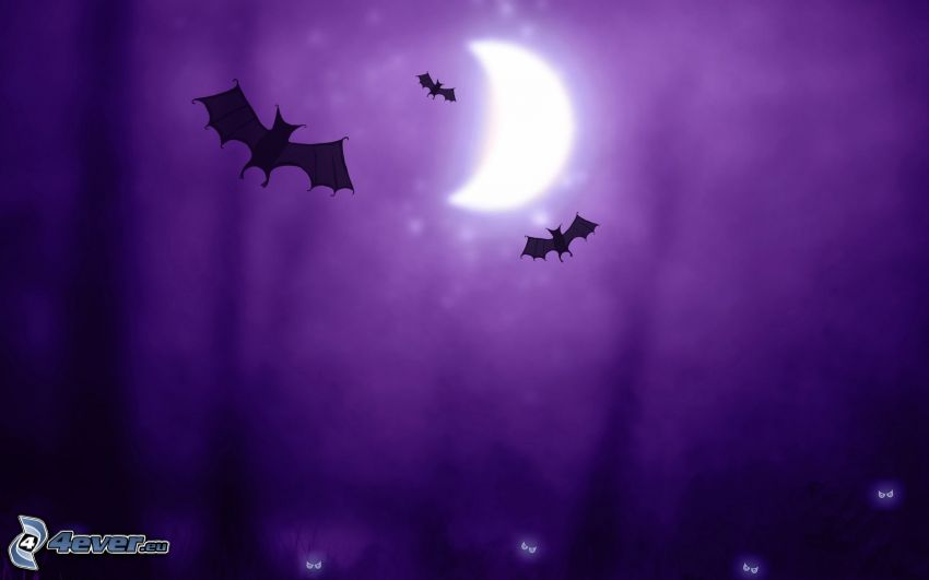 natt, fladdermöss, måne, lila bakgrund