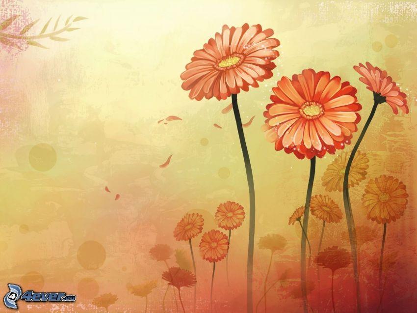orangea blommor, gerberor
