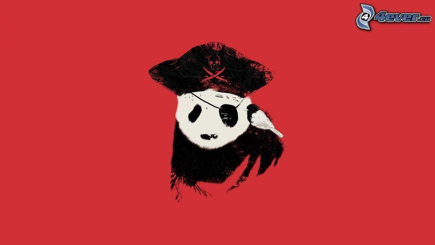 panda, pirat