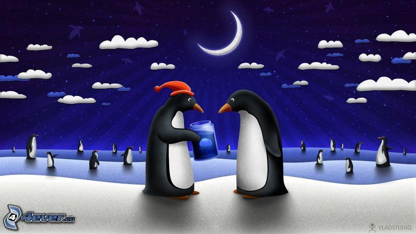 pingviner, natt