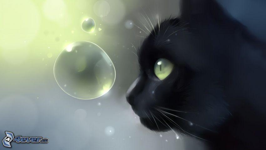 svart katt, bubblor