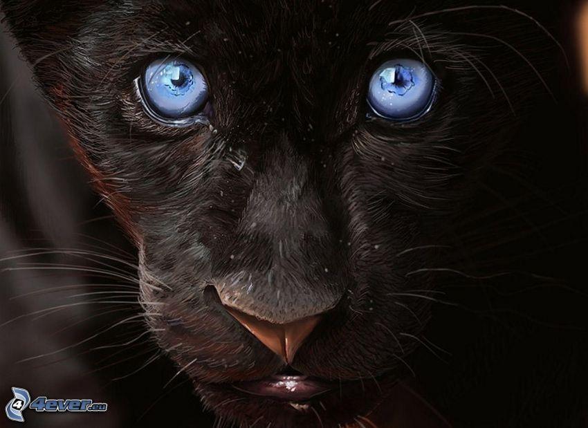 svart panter, blå ögon