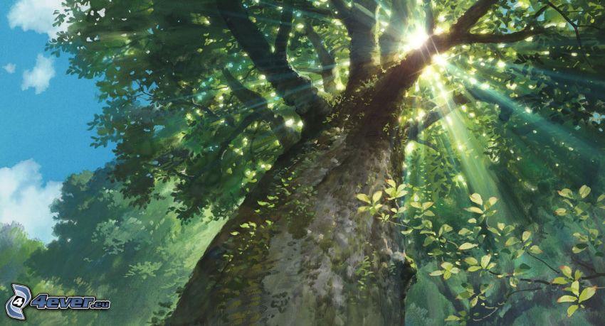 träd, solstrålar