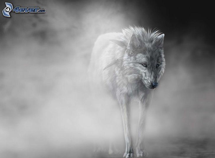 varg, dimma, svart och vitt