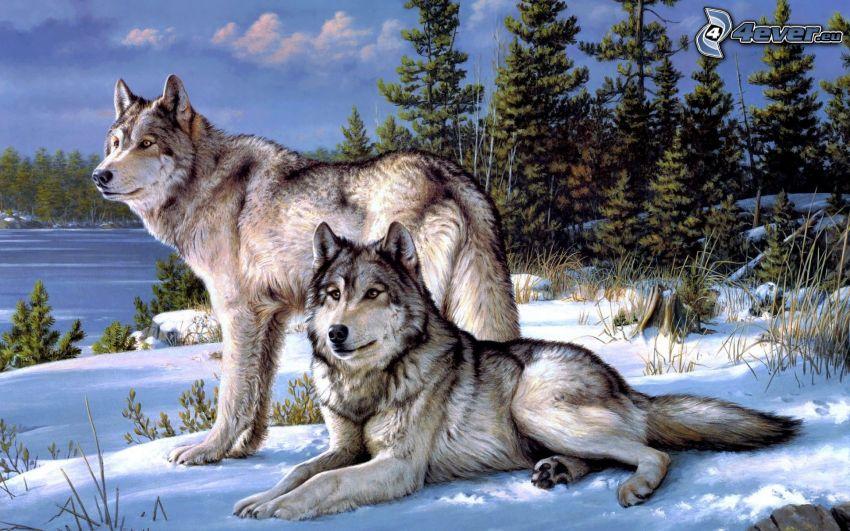 vargar, träd, snö