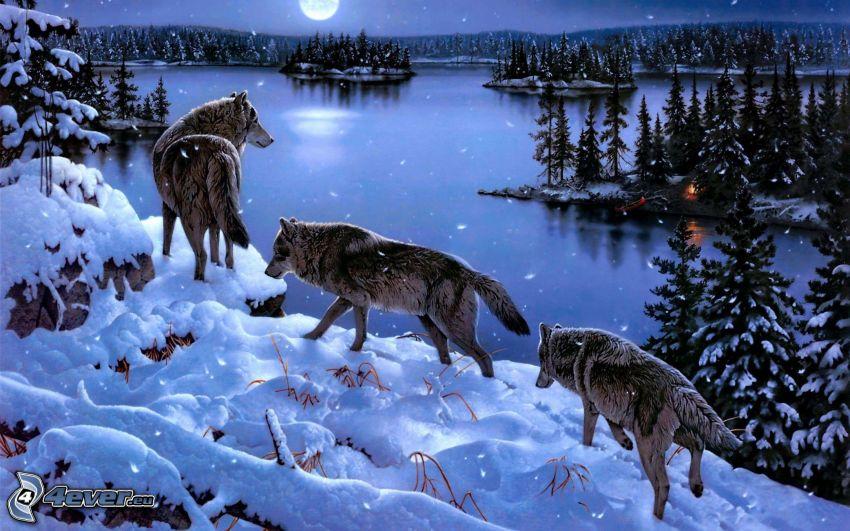 vargar, vinterlandskap, måne, sjö