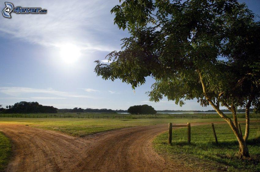 fältstig, vägkorsning, träd, sol