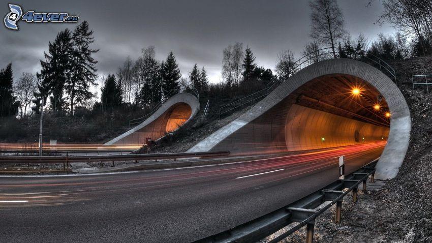 motorväg på kvällen, tunnel, väg, träd, HDR