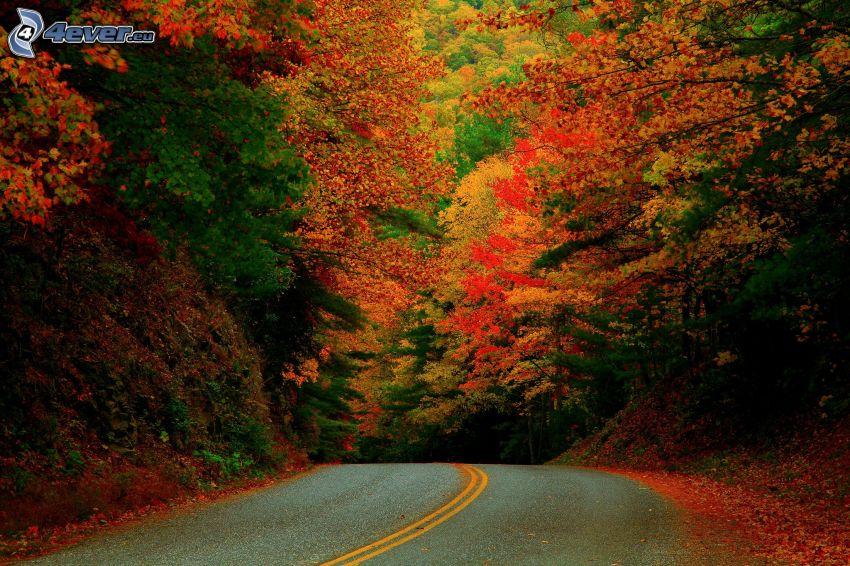 skogsväg, färggrann höstskog
