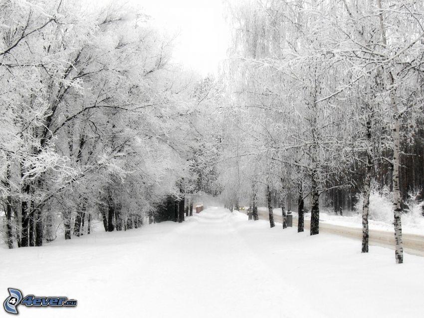 snöig väg, snöklädda träd