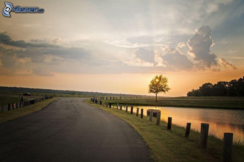 solnedgång över väg, solnedgång bakom träd, sjö