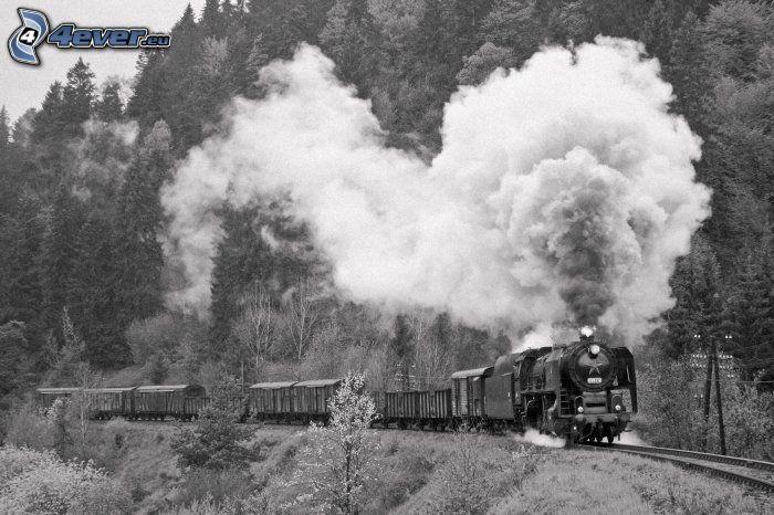 ånglok, lasttåg, rök, skog, svart och vitt