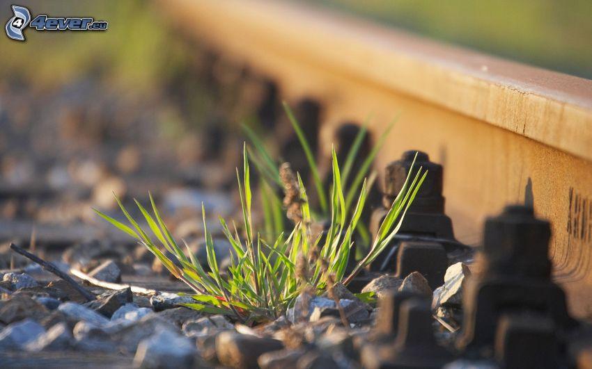 järnväg, gräs