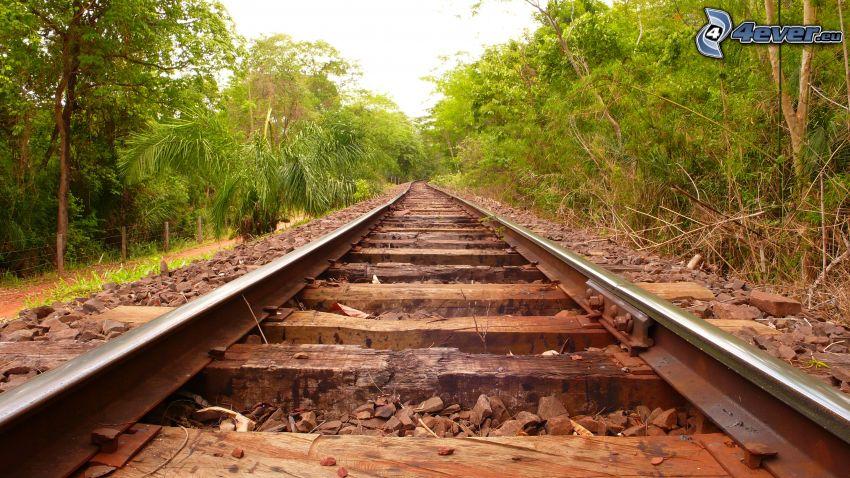 järnväg, skog