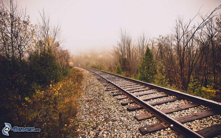 järnväg, träd