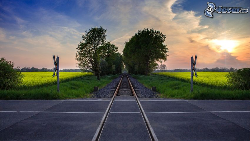 järnvägskorsning, järnväg, trafikskyltar, raps, trädgränd