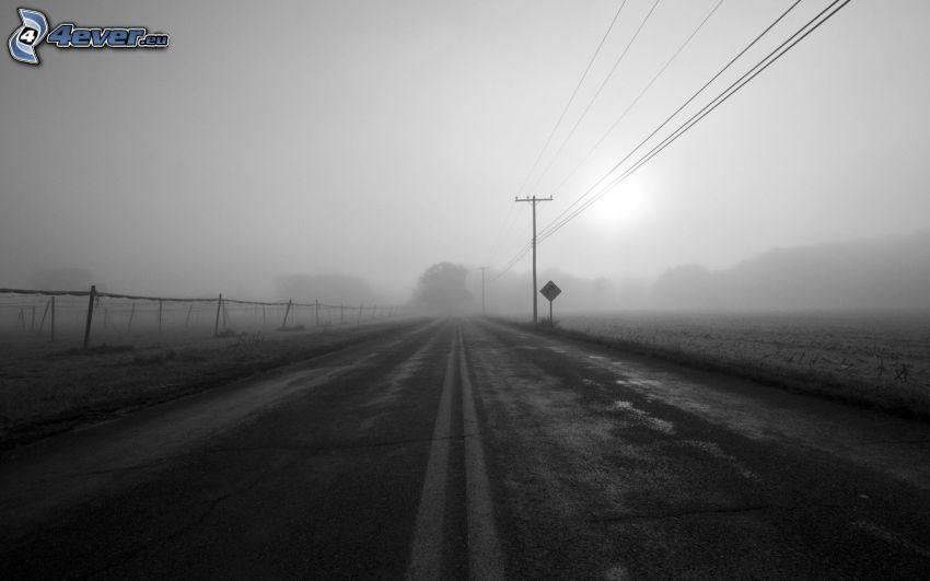 väg, elledningar, dimma, svartvitt foto