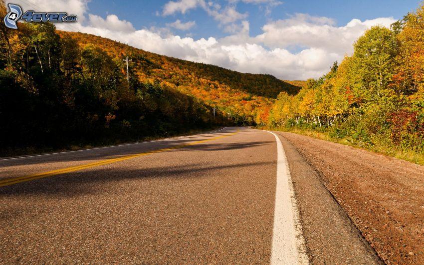 väg, färggrann skog, USA