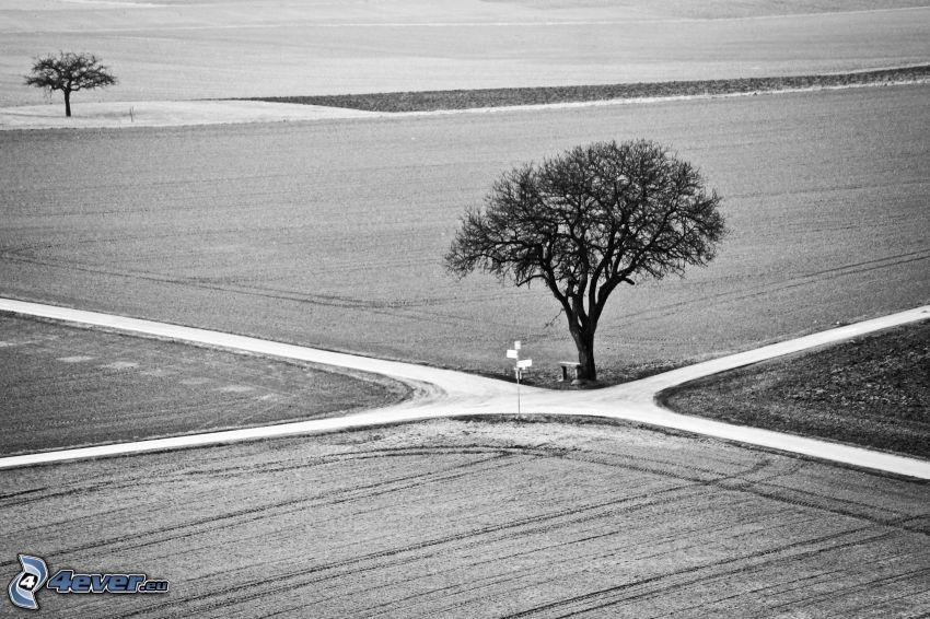 väg, korsning, träd, svartvitt foto
