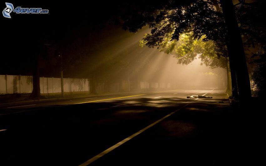 väg, mörker, solstrålar, träd, lik