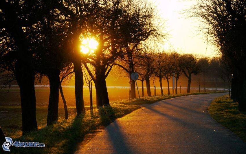 väg, sol, siluetter av träd