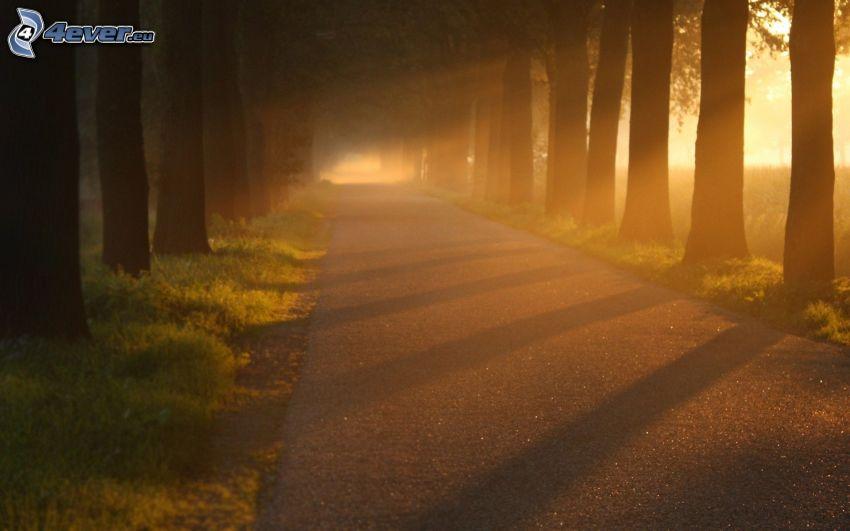väg, trädgränd, solstrålar, solnedgång