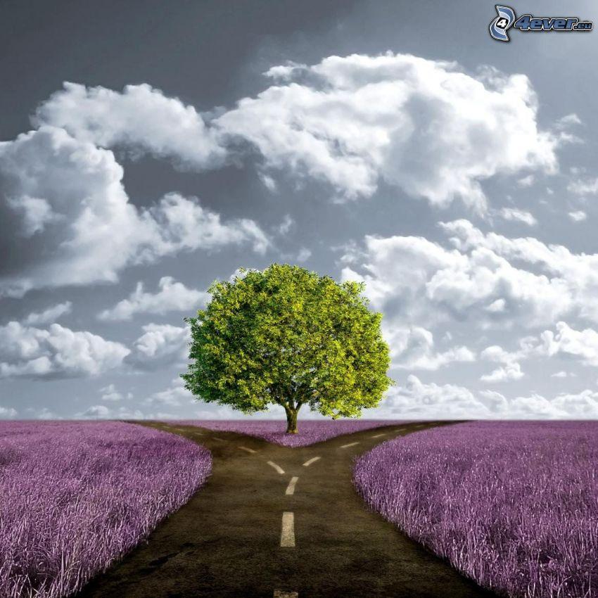 väg, vägkorsning, ensamt träd, moln
