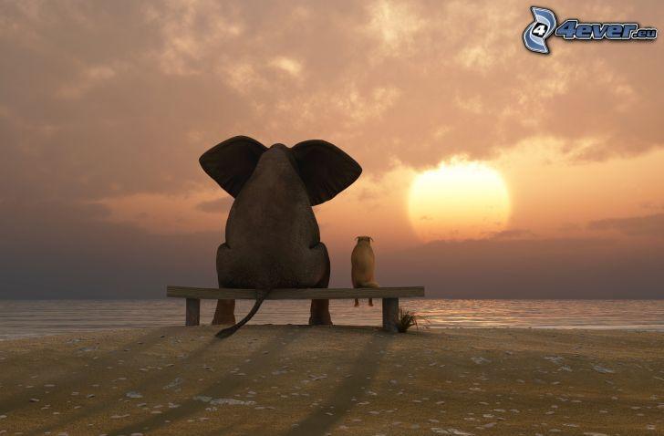 elefant, hund, bänk, solnedgång