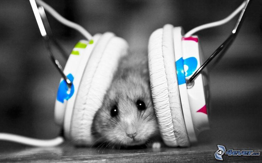 hamster, hörlurar