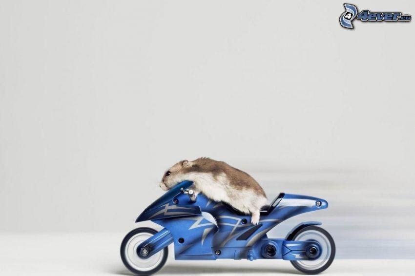 hamster, motorcykel
