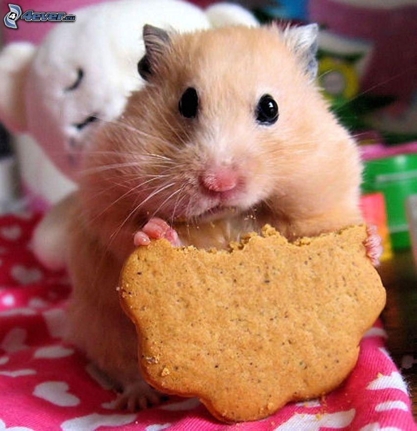 hamster, pepparkaka
