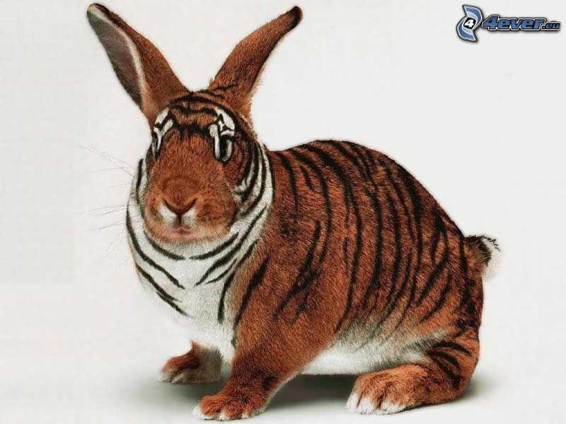 hare, tiger, maskering