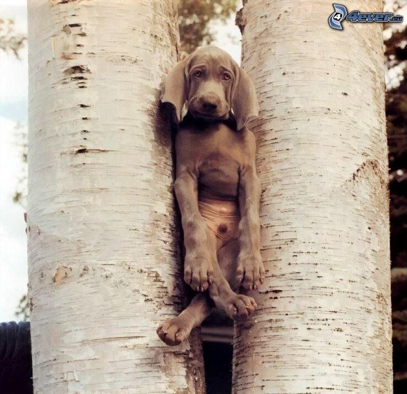 hund, träd, trädstammar