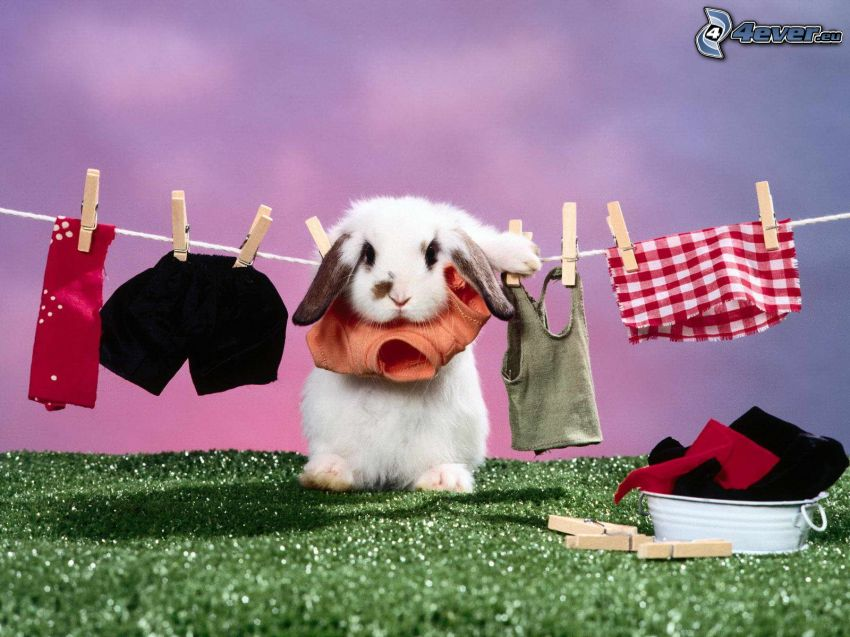kanin, kläder, klädnypor på tråd