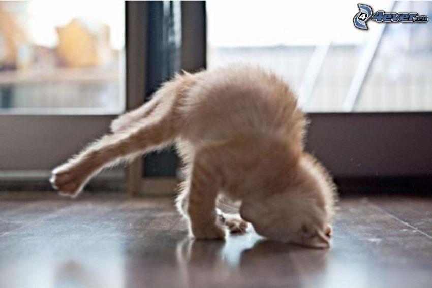 katt, breakdance, handstående
