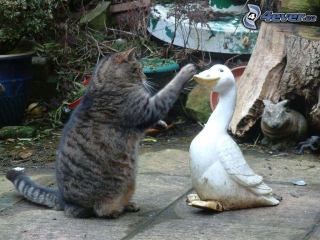 katt, gås, oreda